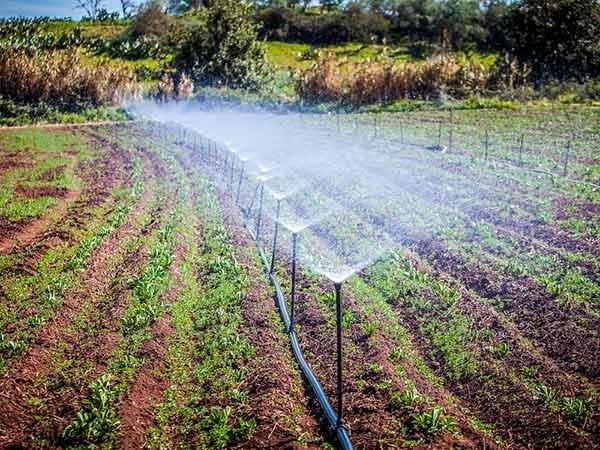 L'irrigazione, la chiave per l'agricoltura con reti in PEAD